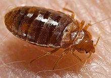 Rental Furniture Bed Bugs Cases